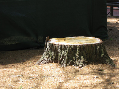 The stump of the offending tree.