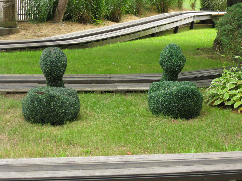 Topiary at the Jr. Sports Cars.