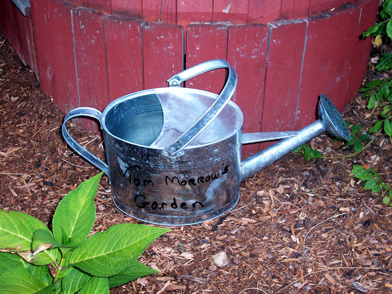 Watering can in Tom Morrow's memorial hydrangea garden.
