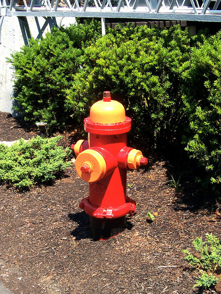 A freshly-painted fire hydrant near Giant Sky Wheel.