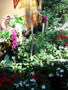 The tomatoes below the Portofino sign were getting crowded out by the flowers.