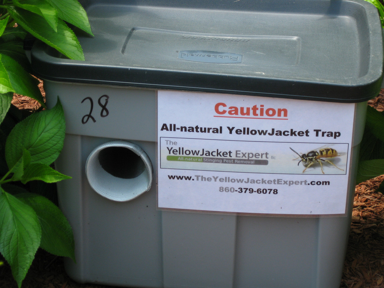Another yellow jacket trap.