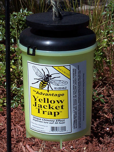 One of the many yellow jacket traps seen in the park.