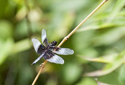 Dragon Fly - Xiangyang Shi