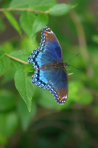 Butterfly2 Robert Garner