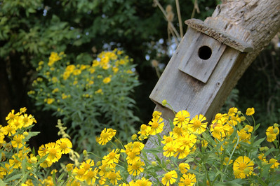 Bird House and Flowers - Paula Oja