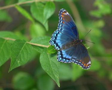 butterfly1  - Robert Garner