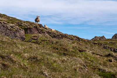 2018, Iceland, near Vioborossel