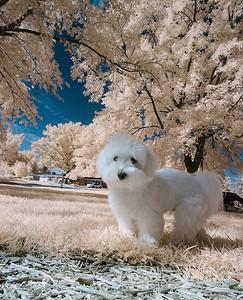 Infrared Puppy December 12, 2008