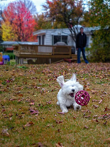Fall Ball November 7, 2009