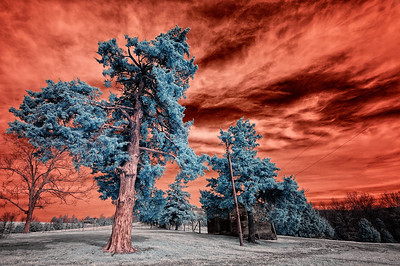 """Fire in the Sky March 19, 2009  Captured with an infrared-converted Nikon D70s.  Most of the time I """"channel swap"""" the colors on my infrared (IR) shots. I normally don't like the uncorrected red sky. But this one seemed to work. The subject matter isn't great, but the tree in the foreground is pretty dramatic in IR."""