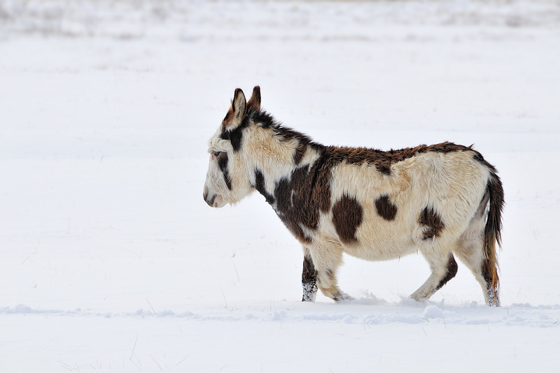 Snow Pony January 16, 2009
