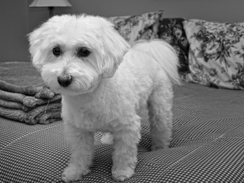 Meet the new dog, same as the old dog. . . but with 2lbs less hair!