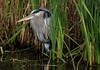 Different loop around Shoveler, but same bird as before.
