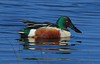 I never get tired of photographing colorful ducks in calm water.
