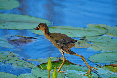 Anahuac_NWR_June_2015_RAW0948