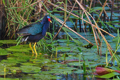 Anahuac_NWR_June_2015_RAW0953