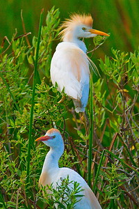 Anahuac_NWR_June_2015_RAW0939