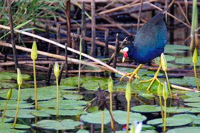 Anahuac_NWR_June_2015_RAW0950