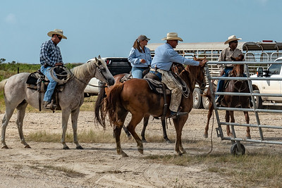 Anahuac NWR:  Round-Up & Cattle Drive