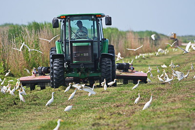 20180720_AnahuacNWR_Tracto_Mowing_&_Cattle_Egrets_500_8733