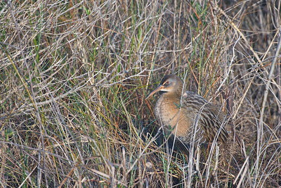 Anahuac NWR with Norm Welsh 1-10-2019