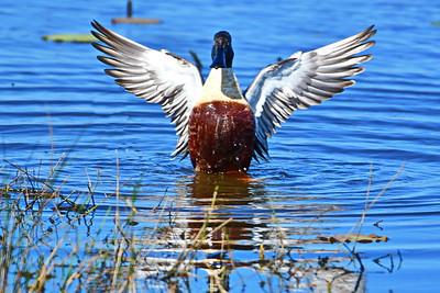 Anahuac National Wildlife Refuge on 021617