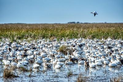 One Goose Landing