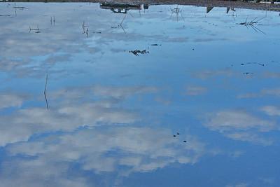 Shoveler Pond Reflections