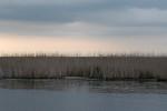 Dusk at Shoveler Pond