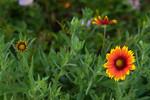 Flower,sRGB21x14x300,000135