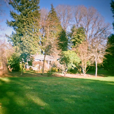 Diana Mini -  Plantmad Garden