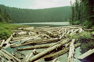 Mt Hood in Svema 125 - Wahtum Lake