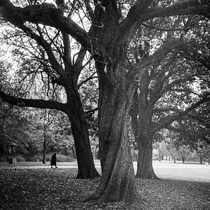 Leica II mini_20191220_233347