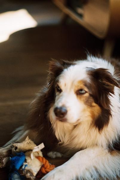 Nikon FE2, Nikkor 85/2 AIS, Kodak Portra 800