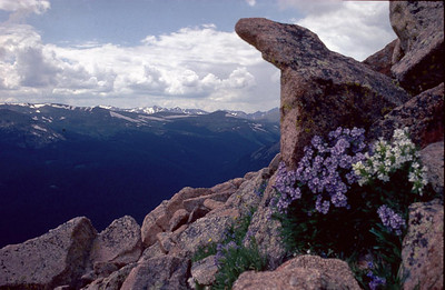 Analoge 0015 1982 usa colorado fjell 4000m blomster