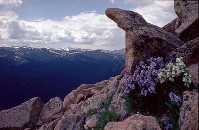 Analoge 0015 1982 usa colorado fjell 4000m blomster