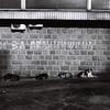 Dogs and graffiti