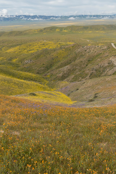 Looking down the slope of the Temblors and across Carrizo Plain to the Caliente range.  We thought the orange flowers were poppies from a distance but I think they are San Joaquin Blazingstar (mentzelia pectinata), sadly no closeups