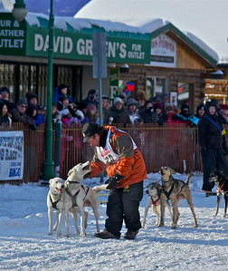 2012 Fur Rondy Sprint Dog Races in Anchorage. This is a world class dog race with competitors from all over the world come to race there dogs. Musher getting his team ready.