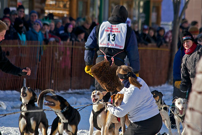 2012 Fur Rondy Sprint Dog Races in Anchorage. This is a world class dog race with competitors from all over the world come to race there dogs. Musher checking on his team before his start.