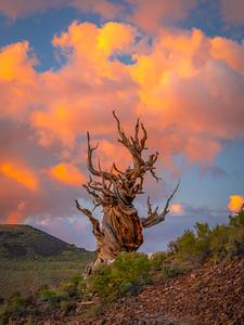 Epictetus The Stoic Philosopher: Ancient Bristlecone Pine Forest Fine Art Landscape Nature Photography  Elliot McGucken Fine Art Landscape Nature Photography Fuji GFX100 Fine Art
