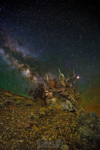 """""""Immortality,"""" Ancient Bristlecone Pine Forest Milky Way, Inyo National Forest, White Mountains, California"""