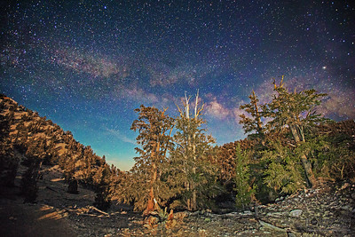 """""""Guardians of the Night,"""" Ancient Bristlecone Pine Forest Milky Way, Inyo National Forest, White Mountains, California"""