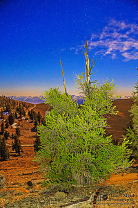 """""""Bristlecone Youth,"""" Ancient Bristlecone Pine Forest and stars, Inyo National Forest, White Mountains, California"""