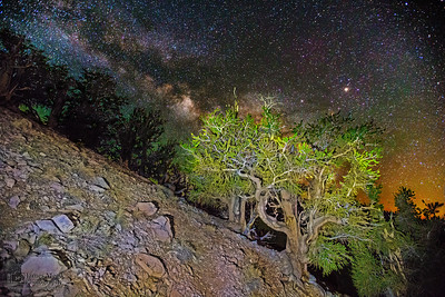 """""""Steep Rise,"""" Ancient Bristlecone Pine Forest Milky Way, Inyo National Forest, White Mountains, California"""