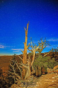 """""""Moonlit Bristlecones,"""" Ancient Bristlecone Pine Forest and stars, Inyo National Forest, White Mountains, California"""