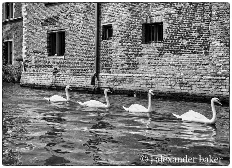 Four Swans, Bruges