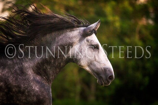 Art of Riding - Silver Springs FL