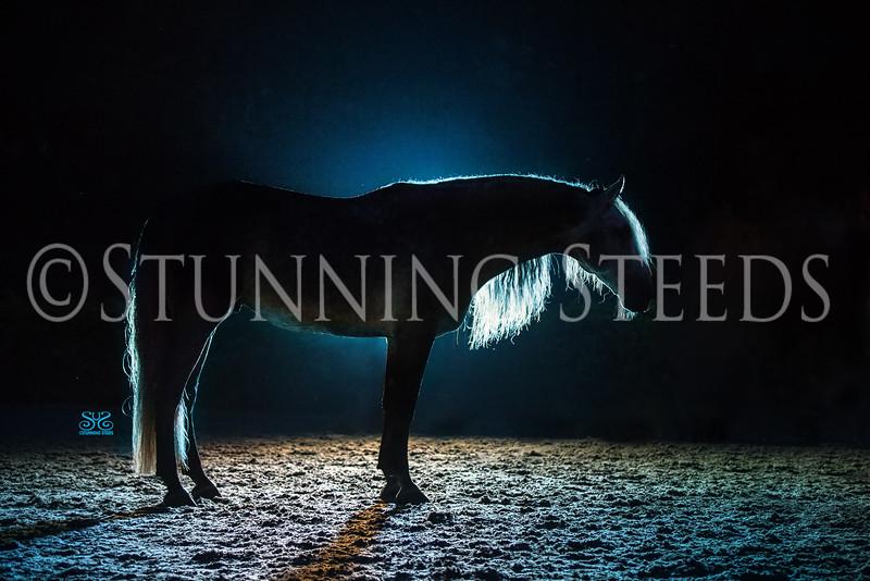 00StunningSteedsPhoto-HR-1779tu